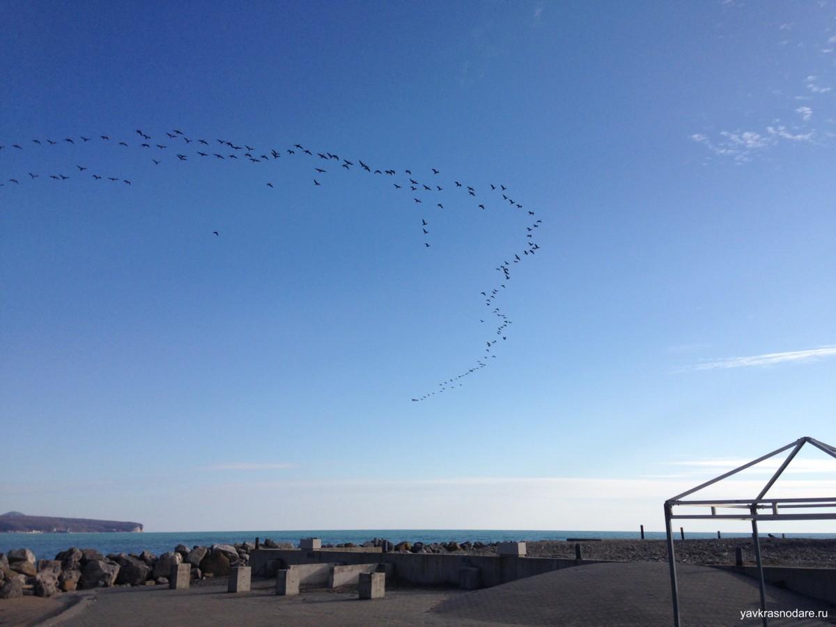 Возвращение птиц