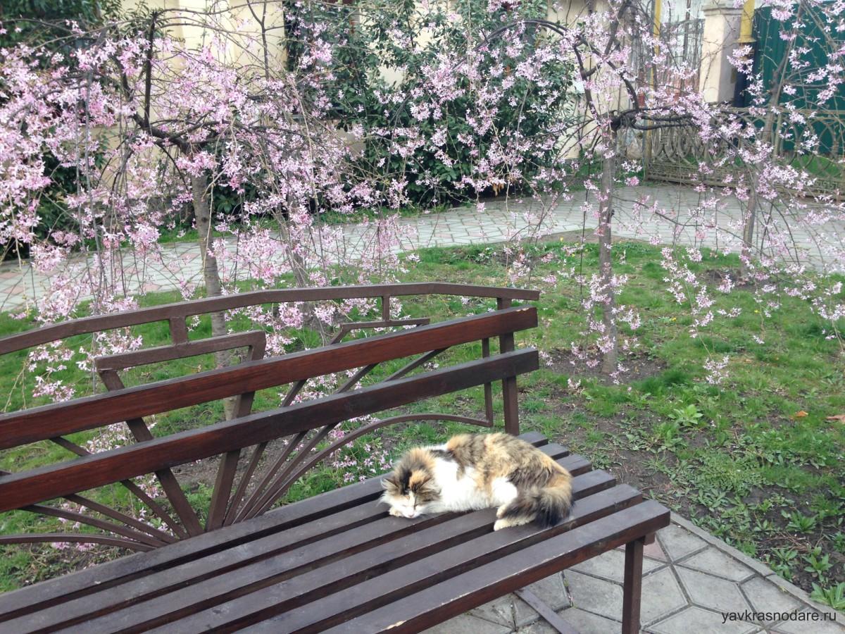 Кот в Горячем Ключе