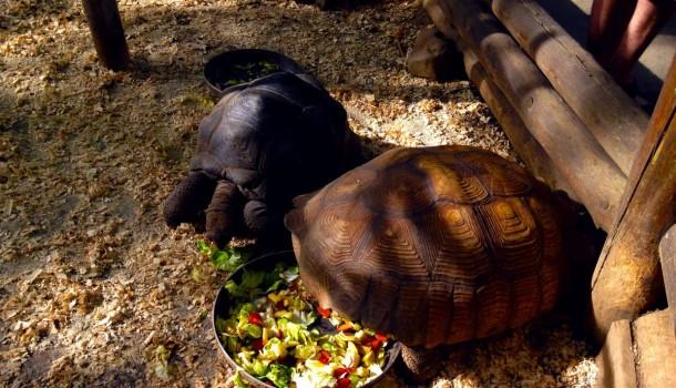 Черепахи в Сафари-парке
