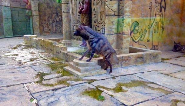 Гиена в Сафари-парке