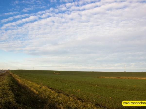 Зелёная трава в Краснодаре